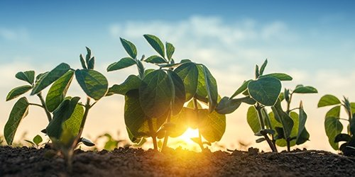 Seeds growing with sunset. Operating Line of Credit available at West Iowa Bank